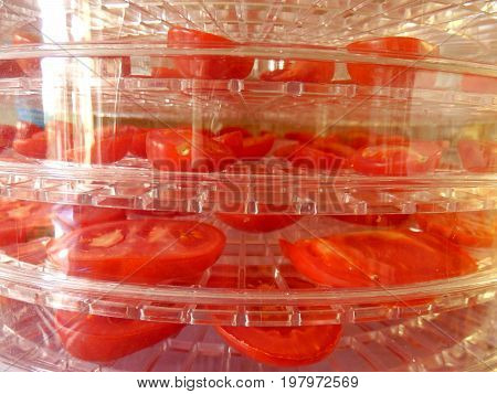 Layers of sliced tomatoes drying in an electric dehydrator