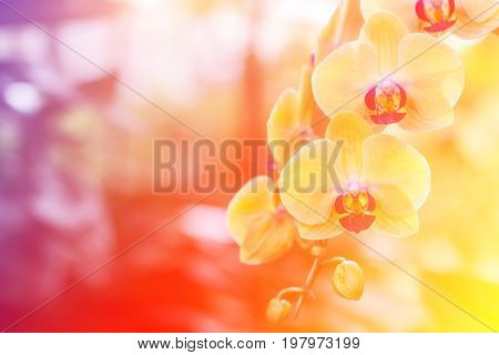 Orchid flower in garden at winter spring for postcard beauty. agriculture idea concept design. Orchids are export business products of Thailand that make a lot of money. Color effect picture.
