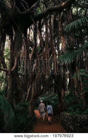 Loro Parque Puerto de la Cruz Tenerife Canary islands Spain - May 27 2017: Couple of tourists follow the path in The Jungle Ara in Loro Park with lush and leafy vegetation
