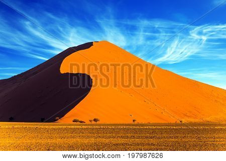 Namibia, South Africa. Sunset in ancient in the world Namib Desert. The concept of extreme and exotic tourism