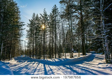 Snowy winter in Lapland. The dim northern sun illuminates the coniferous forest. The concept of active and extreme tourism. In deep snow there are blue shadows