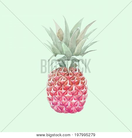 Beautiful vector illustration with hand drawn watercolor pineapple fruit on transparent background