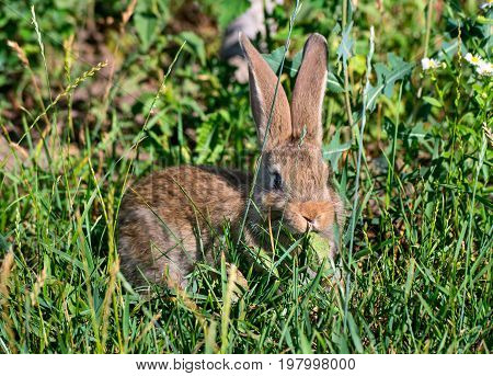 Beautiful young rabbit sitting in the grass and looking at camera