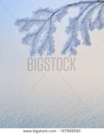 Gentle winter or christmas background - branch hoarfrost covered in pink rays of the setting sun over the snowy surface with space for text