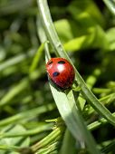 The ladybug on the plant. nature summer poster
