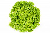Batavia lettuce front view. Also French or summer crisp. Fresh bright green salad head with crinkled leaves and a wavy leaf margin. Variety of Lactuca sativa. Macro food photo close up. poster