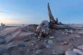 Whitefish Point - Driftwood and Lake Superior stones litter Whitefish Point beach in the Upper Peninsula of Michigan at sunset poster
