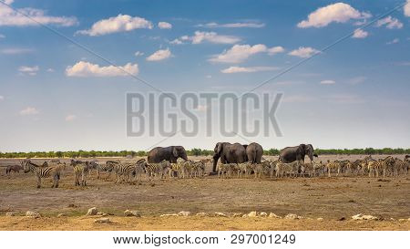 Herd Of African Elephants And Zebras At A Waterhole In Etosha National Park, Namibia, Before Sunset.