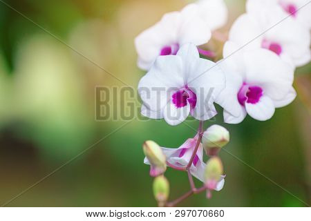 Beautiful Orchid Flower With Green Natural Background.