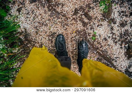 Hailstones Under Feet Close-up. Big Hailing On Ground. Man With Yellow Raincoat And Ankle Boots On T