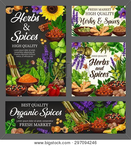 Spices, Cooking Flavoring Herbs And Herbal Seasoning. Vector Culinary Condiments Sunflower, Lemongra
