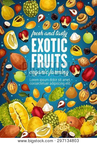 Exotic Tropic Fruits Tamarind, Jackfruit Or Pomelo And Quince Pear. Tropical Fruit Agriculture And F