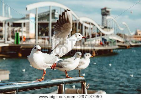 Port Vell And Rambla Del Mar, Barcelona, Spaiin