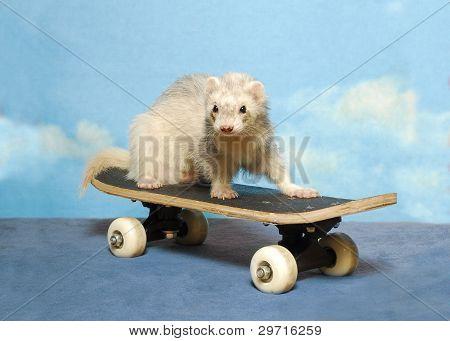 A Ferret on a Skateboard