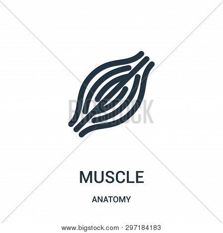 Muscle Icon Isolated On White Background From Anatomy Collection. Muscle Icon Trendy And Modern Musc