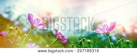 Flowering Purple Flower In Meadow, Blooming Purple Flowers - Beautiful Nature In Spring