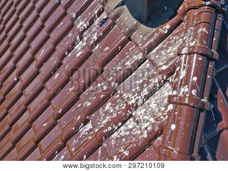 Aerial View On Corrugated Roof Dirty With Massive Number Of Bird Droppings. Rooftop With Unclean Til