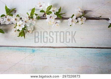 Spring Flower Landscape. Spring Blooming Spring Flowers On Wooden Background. Blue Flowers In Spring