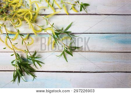 Spring Flower Landscape. Spring Blooming Spring Flowers On Wooden Background. Yellow Flowers In Spri