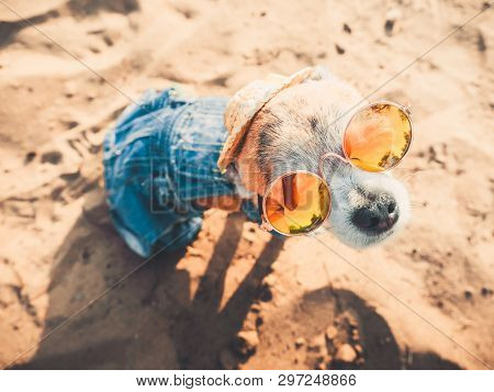 Chihuahua Wearing Sunglasses And Straw Hat Sits On A Beach By The River Enjoying The Sun. Fashionabl