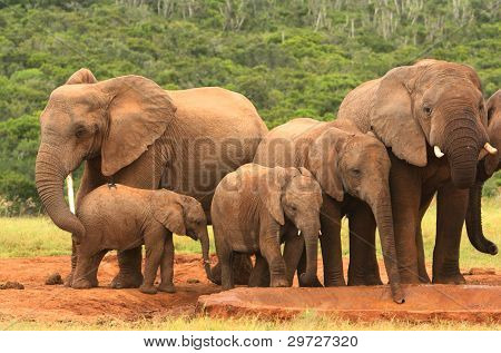 Family of African elephants, South Africa