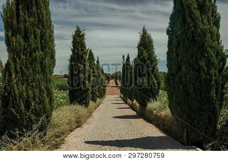 Charming Cobblestone Path Encircled By Poplars And Bushes In A Vineyard Near Estremoz. A Nice Little