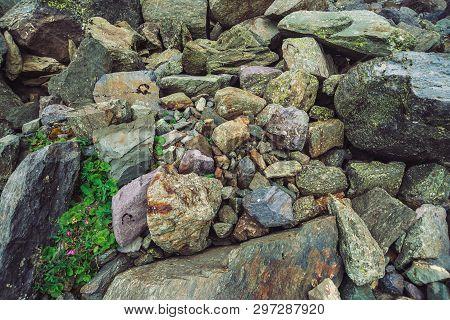 Multicolored Boulder Stream. Loose Rock Close Up. Pink Flower Among Randomly Stones. Amazing Detaile
