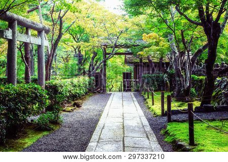 Peaceful Japanese Public Garden In Japan. Relaxation And Tranquility Nature Landscape.