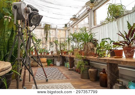Beautiful Natural Background Of Indoor Plants, Greenhouses. Urban Jungle, A Place For Rest And Relax