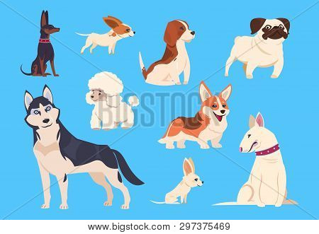 Cartoon Dogs Breeds. Corgi And Husky, Poodle And Beagle, Pug And Chihuahua, Bull Terrier. Comic Pet