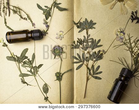 Natural Herbal Medicine With Fresh Herbs And Flowers, Aromatherapy Essential Oils On Paper Backgroun