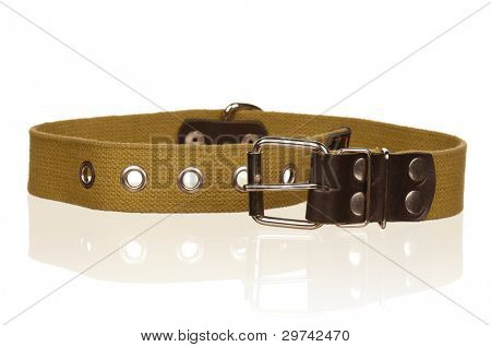 New dog collar isolated on the white background poster