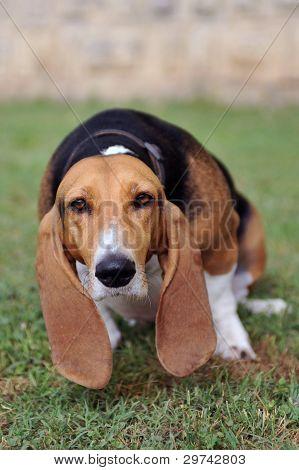 Urinate Dog