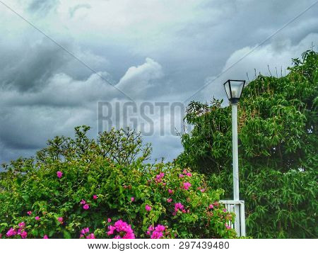 Pink Flowers On Bush With Light Post Against Cloudy Sky