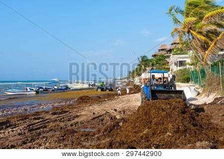 PLAYA DEL CARMEN,MEXICO - APRIL 19,2019 :  The battle against sargassum seaweed continues in Playa del Carmen as local workers try to clean the beach