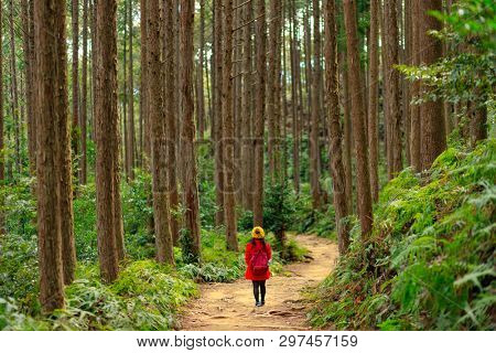 Woman trekking in a dense Cryptomeria forest in the Kumano Kodo pilgrimage route, Japan