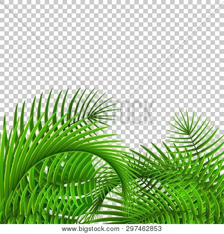 Gree Tropical Plants On Transparet Background. Isolated Palm Leaves.