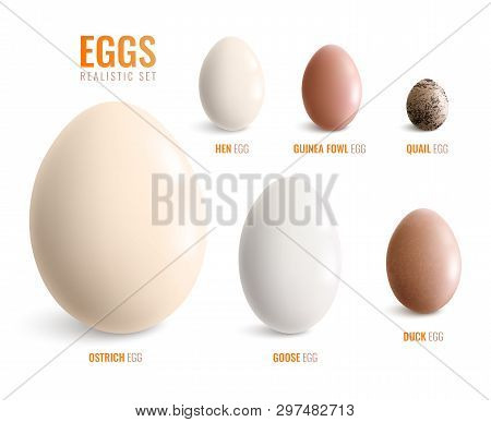 Colored Realistic Eggs Icon Set With Eggs Of Ostrich Hen Goose Duck Guinea Fowl Quail Vector Illustr
