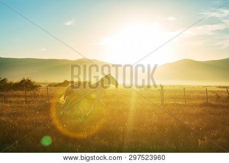 White horse on pasture at sunset.