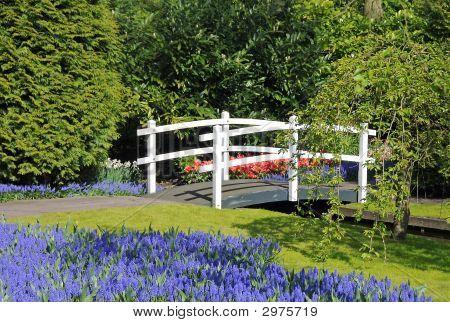 White Bridge In Dutch Garden