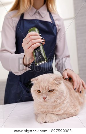 poster of Master of grooming haircut makes gray cat on the table for grooming on a white background
