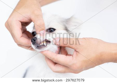 Closeup Cleaning Dog's Teeth With Toothbrush For Pet Health Care Concept, Selective Focus
