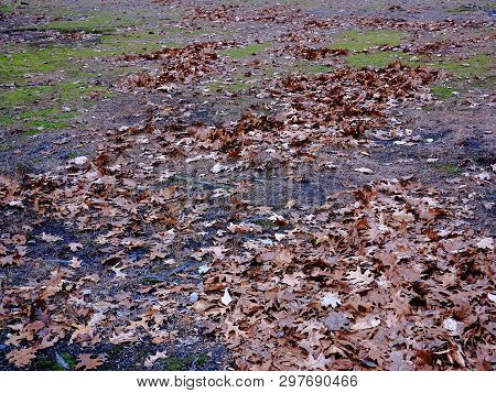 Autumn Leaves in a Field - Wind blown fallen leaves in a park or on a grass lawn in autumn. poster