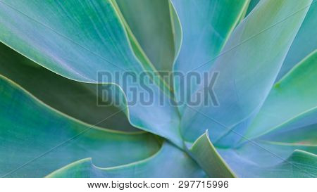Close Up Of Bright Green Leaves For Texture Or Background. Abstract Nature Image. Shallow Dept Of Fi