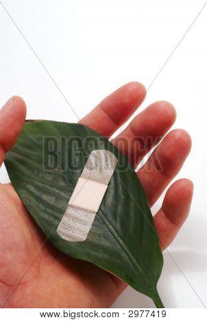 Bandaged Leaf In Human Hands