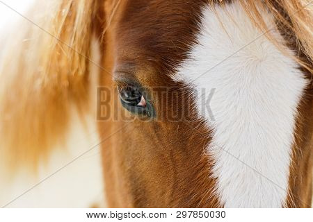 Reflections In The Eyes Of A Horse, View Of A Red Horse, View Of A Horse