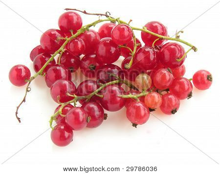 clusters of red currant fruits