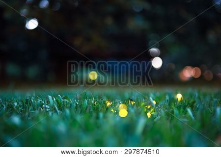 Fireflies on grass at night, shallow focus on strip of grass