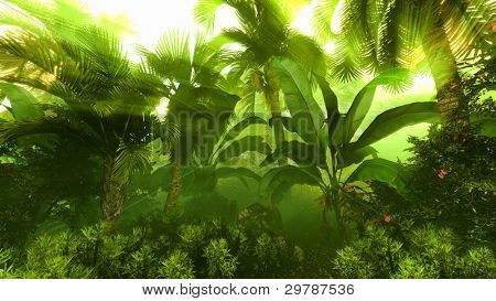 Morning fog in dense tropical rainforest
