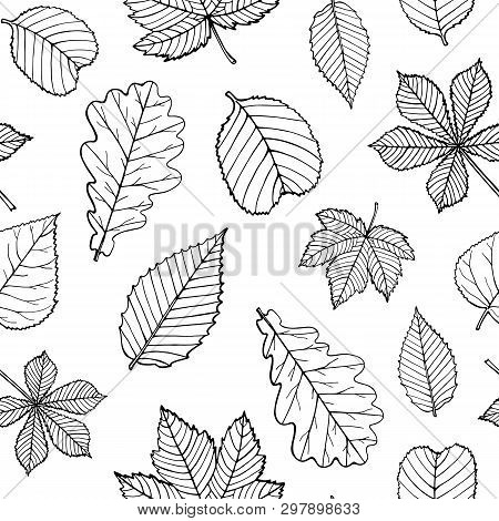 Seamless Pattern Of Black Silhouettes And Outline Leaves Isolated On White Background. Endless Textu